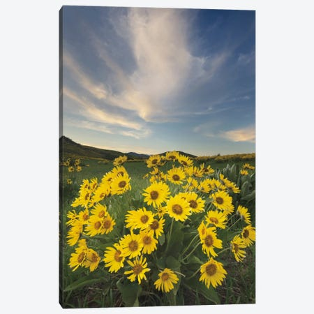 Methow Valley Wildflowers II Canvas Print #WAC7501} by Alan Majchrowicz Canvas Art