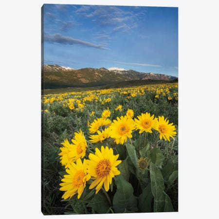 Methow Valley Wildflowers III Canvas Print #WAC7502} by Alan Majchrowicz Canvas Artwork