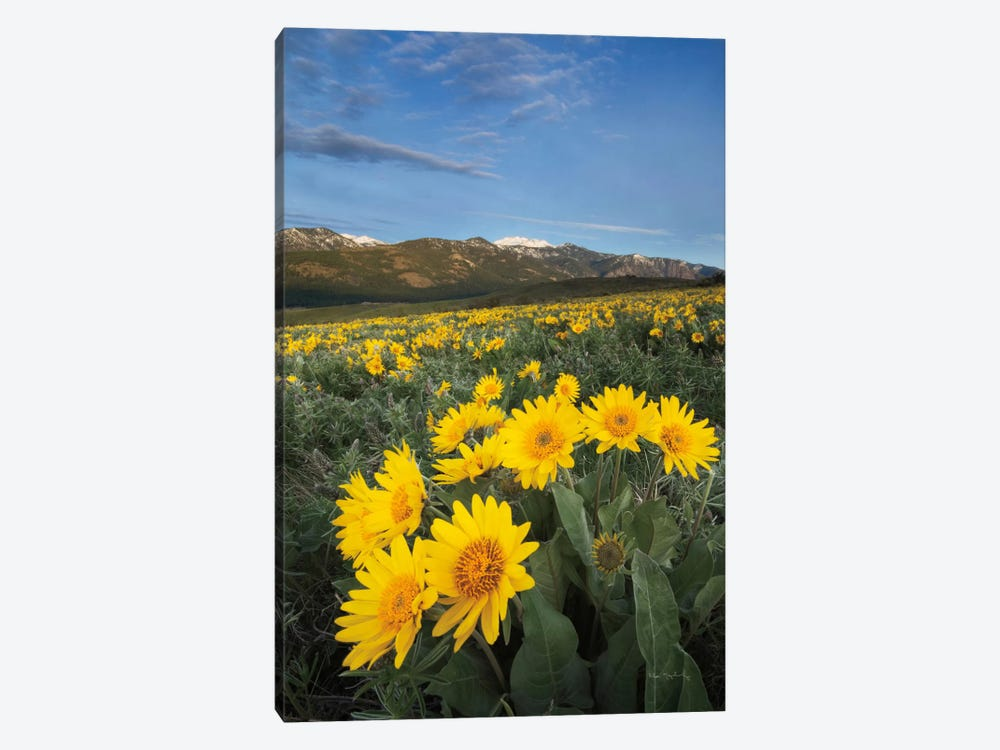 Methow Valley Wildflowers III 1-piece Canvas Wall Art