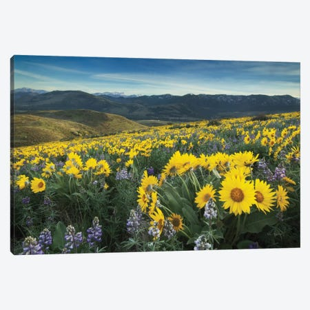 Methow Valley Wildflowers IV Canvas Print #WAC7503} by Alan Majchrowicz Canvas Wall Art