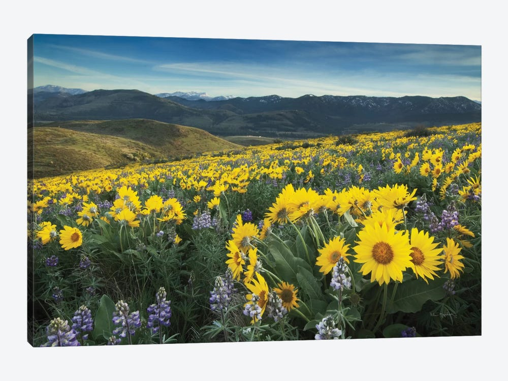 Methow Valley Wildflowers IV by Alan Majchrowicz 1-piece Art Print