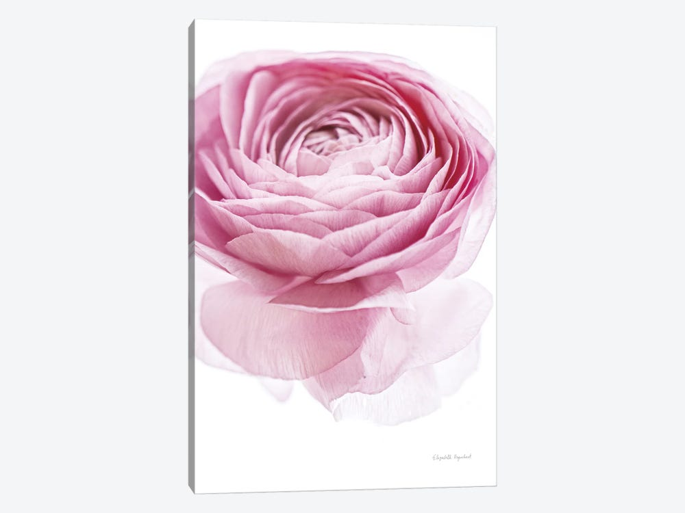 Pink Lady I 1-piece Canvas Print