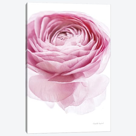 Pink Lady I Canvas Print #WAC7665} by Elizabeth Urquhart Canvas Art