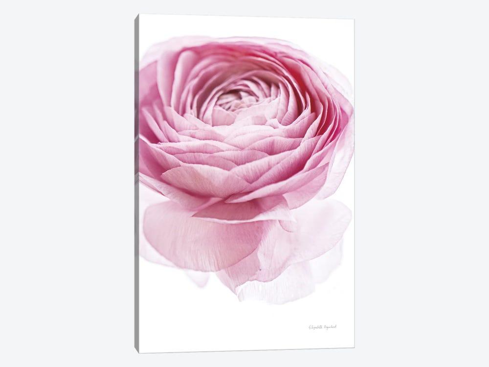 Pink Lady I by Elizabeth Urquhart 1-piece Canvas Print