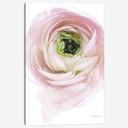 Pink Lady II Canvas Print #WAC7666} by Elizabeth Urquhart Canvas Wall Art