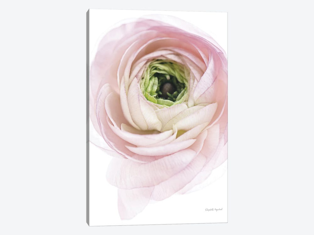 Pink Lady II 1-piece Canvas Wall Art