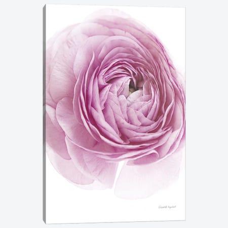Pink Lady III Canvas Print #WAC7667} by Elizabeth Urquhart Canvas Art