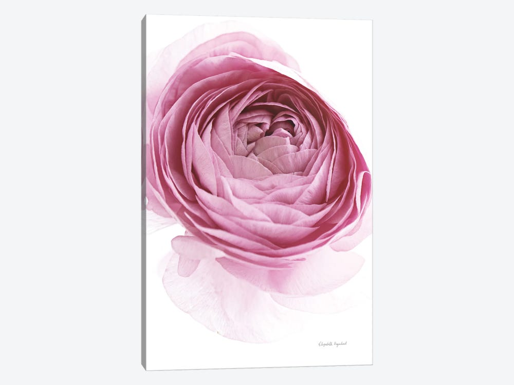 Pink Lady IV by Elizabeth Urquhart 1-piece Canvas Artwork