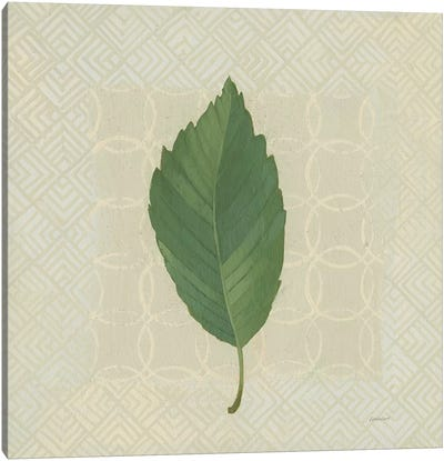 Forest Leaves III Canvas Art Print
