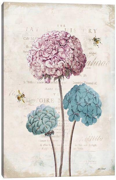 Geranium Study, Pink Flower I Canvas Art Print