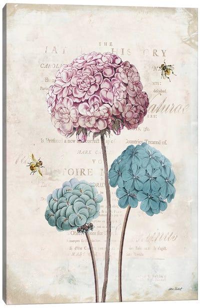Geranium Study, Pink Flower I Canvas Art Print