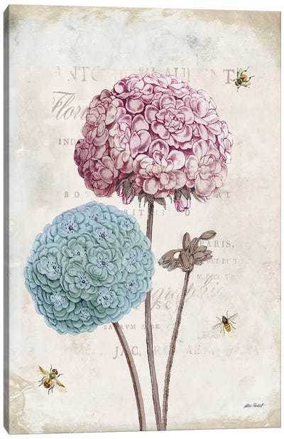 Geranium Study, Pink Flower II Canvas Art Print