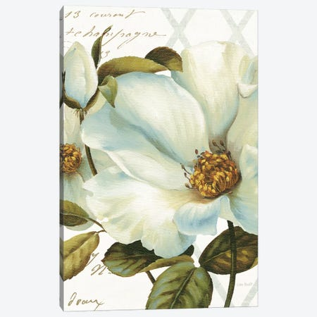 White Floral Bliss II Canvas Print #WAC7816} by Lisa Audit Art Print