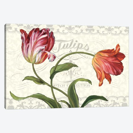 Tulipa Botanica I Cream Canvas Print #WAC782} by Lisa Audit Art Print