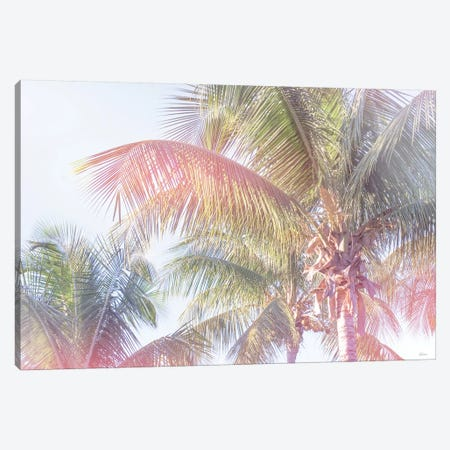 Dream Palm I Canvas Print #WAC7916} by Sue Schlabach Canvas Wall Art
