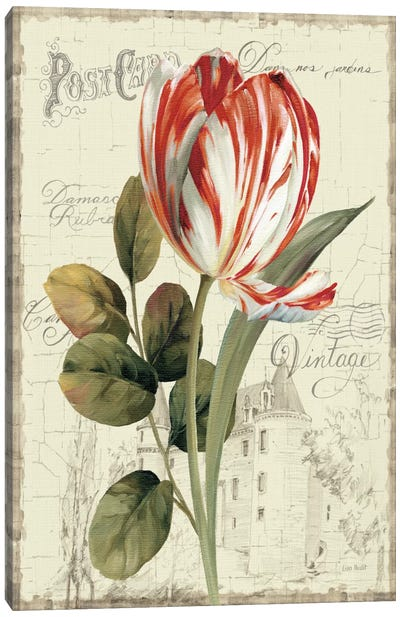 Garden View II Red Tulip Canvas Art Print