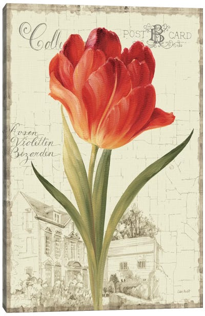 Garden View III Red Tulip Canvas Print #WAC794