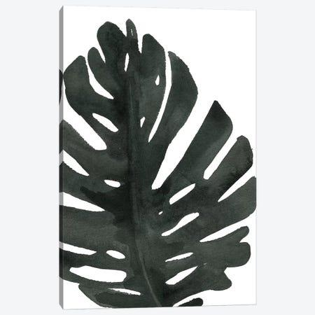 Tropical Palm I Canvas Print #WAC7975} by Wild Apple Portfolio Canvas Wall Art