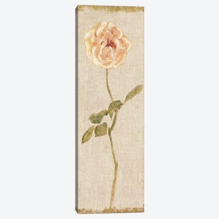 Pale Rose Panel On White, Vintage Canvas Print #WAC8009} by Cheri Blum Canvas Art Print