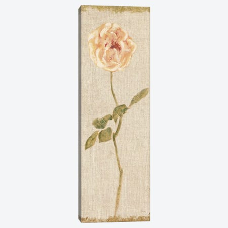 Pale Rose Panel On White, Vintage Canvas Print #WAC8009} by Cheri Blum Canvas Art Print