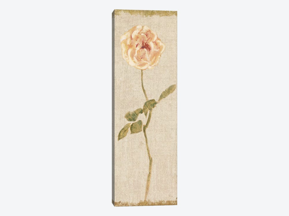 Pale Rose Panel On White, Vintage by Cheri Blum 1-piece Canvas Wall Art