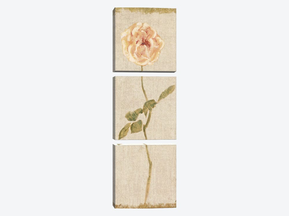 Pale Rose Panel On White, Vintage by Cheri Blum 3-piece Canvas Artwork