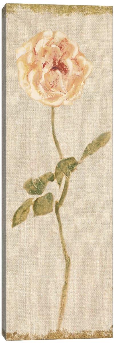 Pale Rose Panel On White, Vintage Canvas Art Print