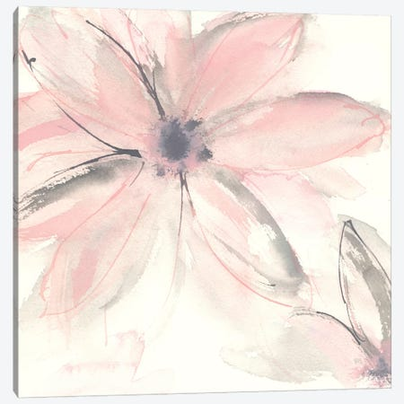 Blush Clematis II Canvas Print #WAC8013} by Chris Paschke Canvas Artwork