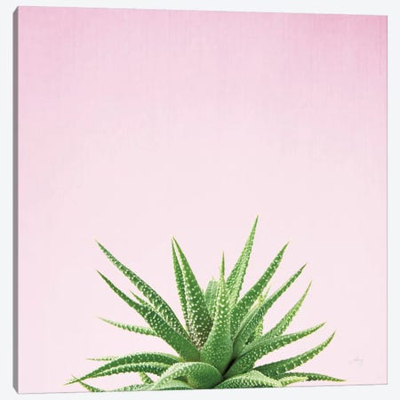 Succulent Simplicity On Pink I  Canvas Print #WAC8081} by Felicity Bradley Canvas Art Print