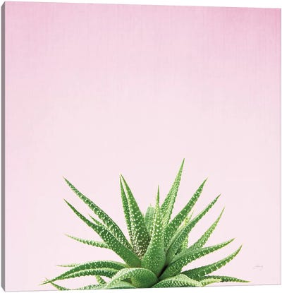Succulent Simplicity On Pink I  Canvas Art Print
