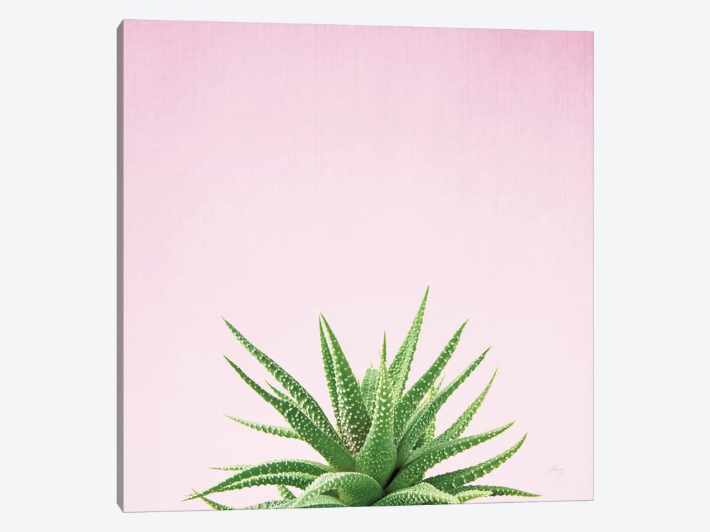 Succulent Simplicity On Pink I  by Felicity Bradley 1-piece Canvas Art