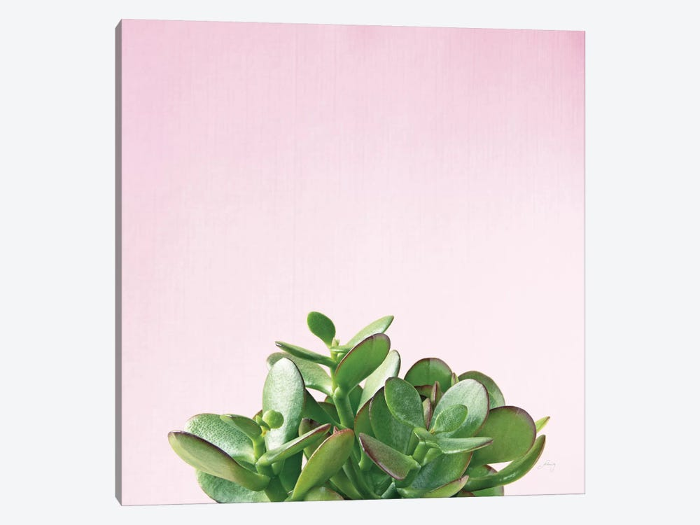 Succulent Simplicity On Pink II by Felicity Bradley 1-piece Canvas Art Print