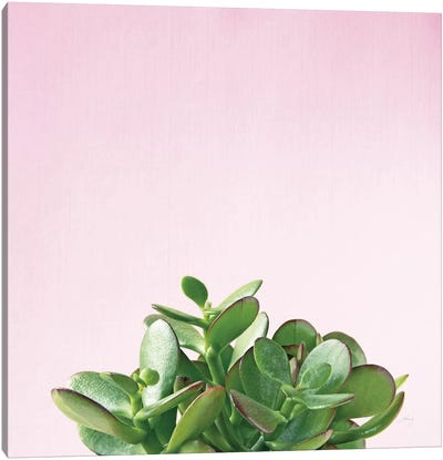 Succulent Simplicity On Pink II Canvas Art Print