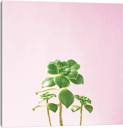 Succulent Simplicity On Pink III Canvas Art Print