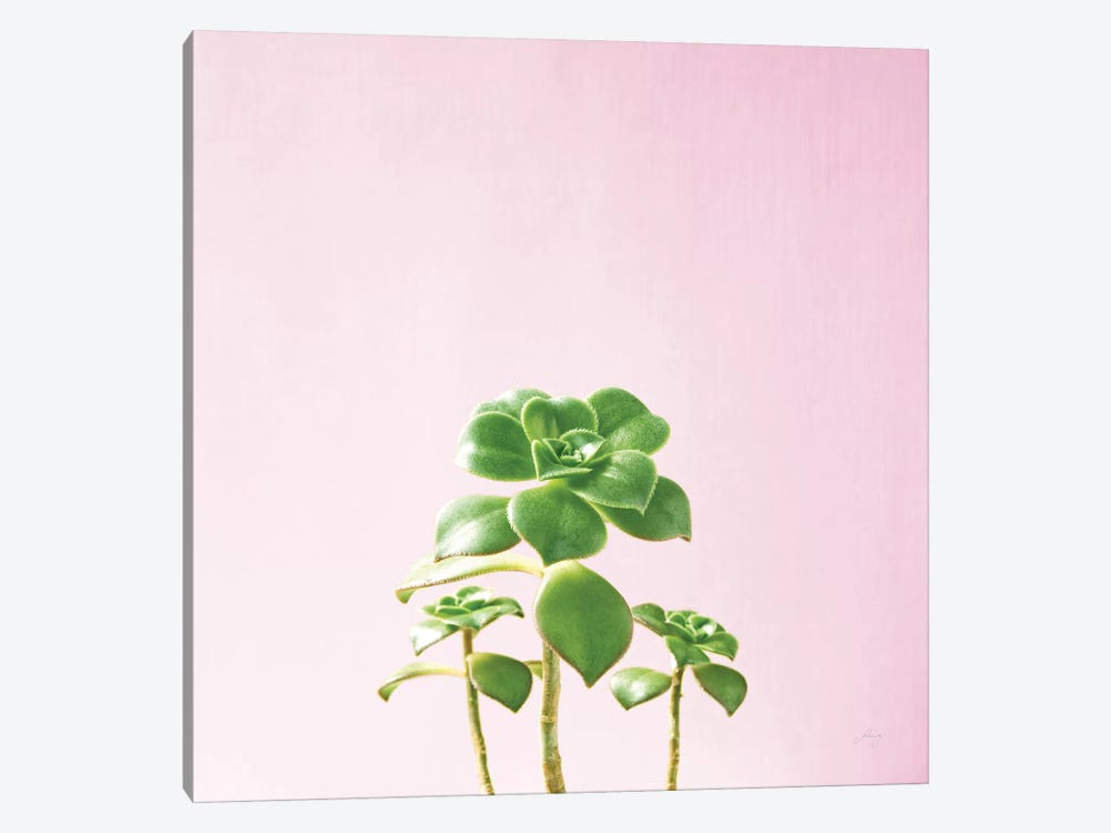 Succulent Simplicity On Pink III 1-piece Canvas Artwork