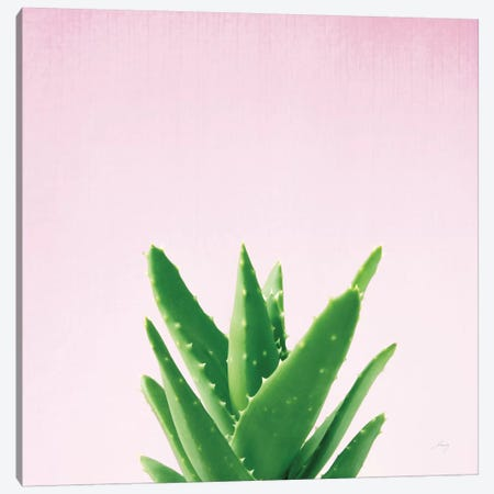 Succulent Simplicity On Pink IV Canvas Print #WAC8084} by Felicity Bradley Canvas Artwork