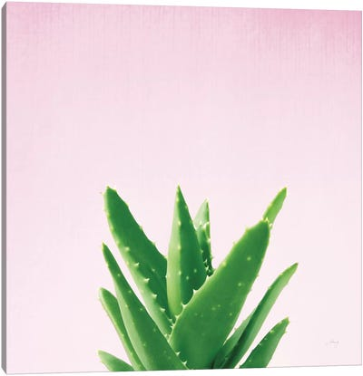 Succulent Simplicity On Pink IV Canvas Art Print