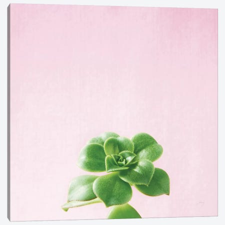 Succulent Simplicity On Pink V Canvas Print #WAC8085} by Felicity Bradley Canvas Artwork