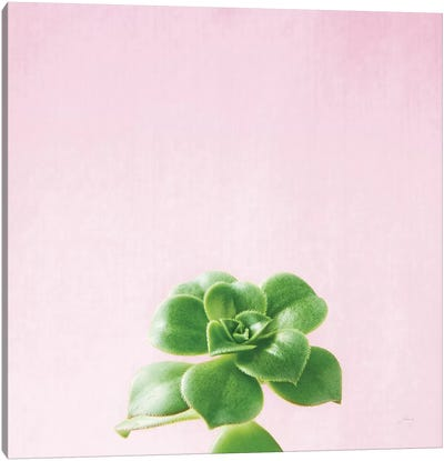 Succulent Simplicity On Pink V Canvas Art Print