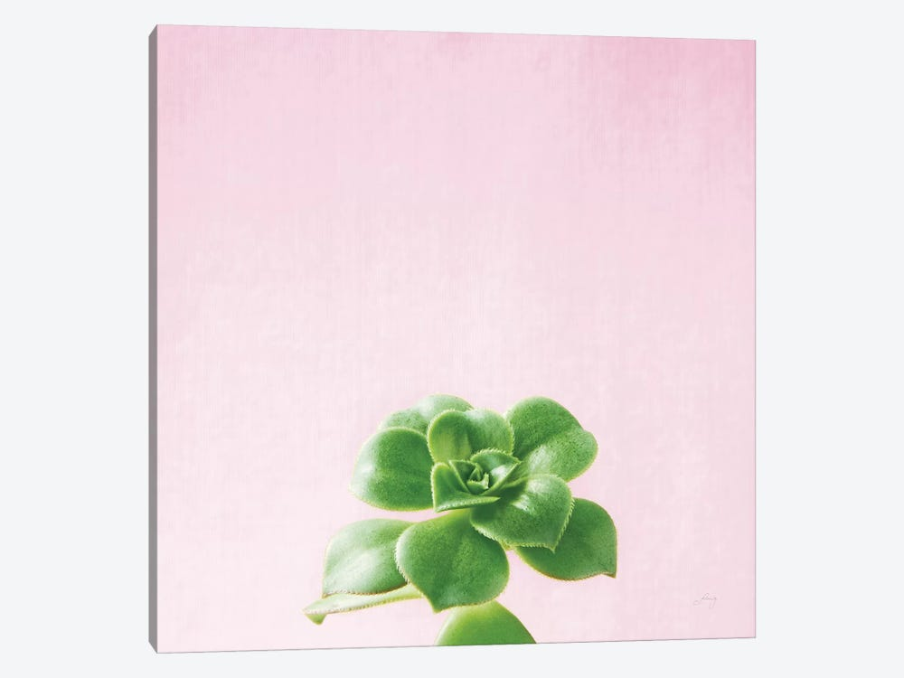 Succulent Simplicity On Pink V by Felicity Bradley 1-piece Canvas Art