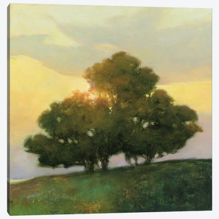Spice Tree Canvas Print #WAC8112} by Julia Purinton Art Print