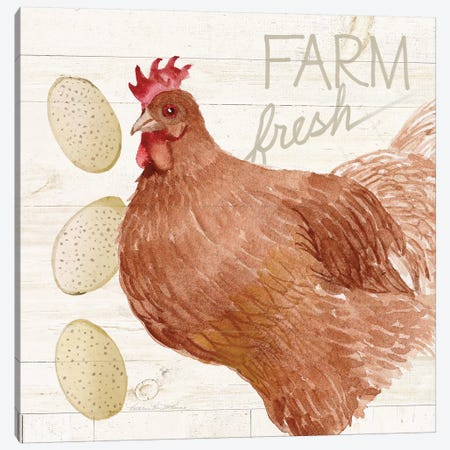 Life On The Farm: Chicken II Canvas Print #WAC8121} by Kathleen Parr McKenna Canvas Art