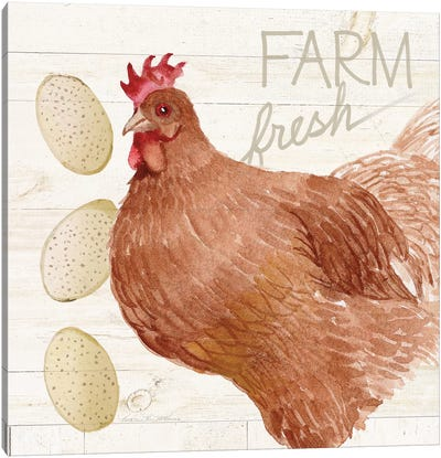 Life On The Farm: Chicken II Canvas Art Print