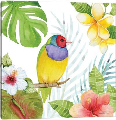 Treasures Of The Tropics V Canvas Art Print