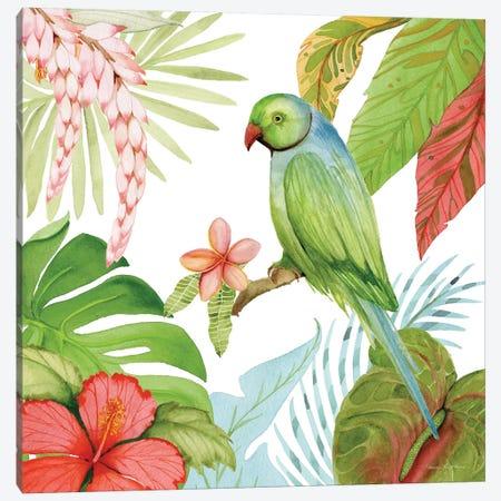 Treasures Of The Tropics VII Canvas Print #WAC8139} by Kathleen Parr McKenna Art Print