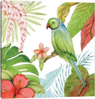 Treasures Of The Tropics VII Canvas Art Print