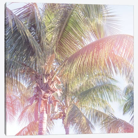 Dream Palm II Canvas Print #WAC8278} by Sue Schlabach Canvas Wall Art