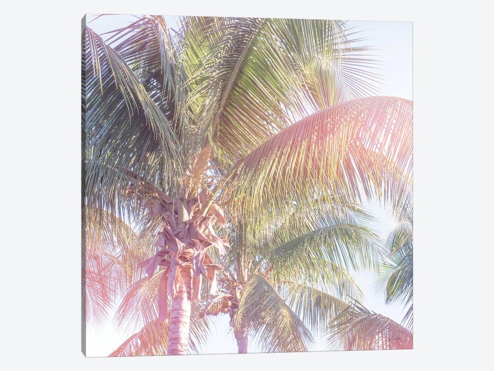 Dream Palm II by Sue Schlabach 1-piece Canvas Print