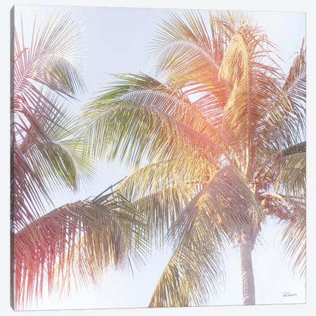 Dream Palm III Canvas Print #WAC8279} by Sue Schlabach Canvas Artwork