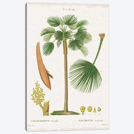 Island Botanicals I Canvas Print #WAC8340} by Wild Apple Portfolio Canvas Wall Art